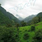 Kerala (Indien) Lbensraum von P.regalis (Foto: Dr.H.Krehenwinkel)