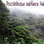 Lebensraum P.subfusca (Foto: Dr.H.Krehenwinkel)