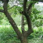 Lebensraum P.tigrinawesseli (Foto: Dr.H.Krehenwinkel)