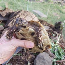 """so kam diese Fundschildkröte im Poecitarium an, """"Schnabel"""" wurde behandelt und das Tier an einen neuen Halter vermittelt."""